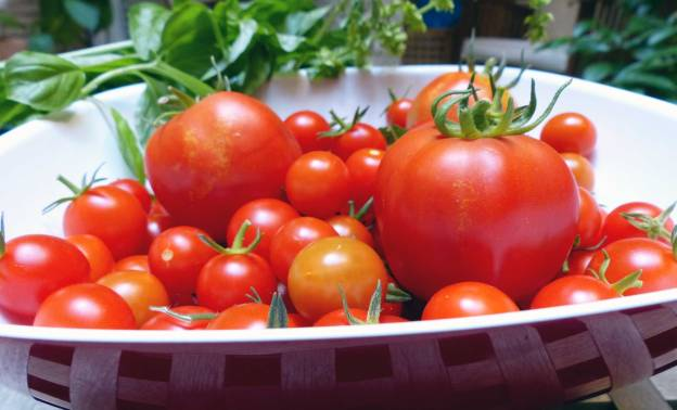 Tomates y albahaca de mi huerto. CP.